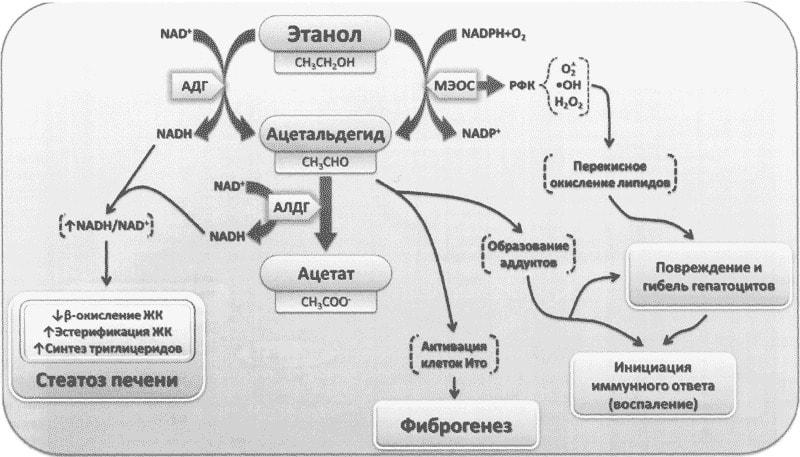 Действие препарата Эспераль